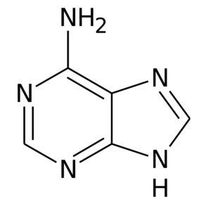 アデニンの化学構造
